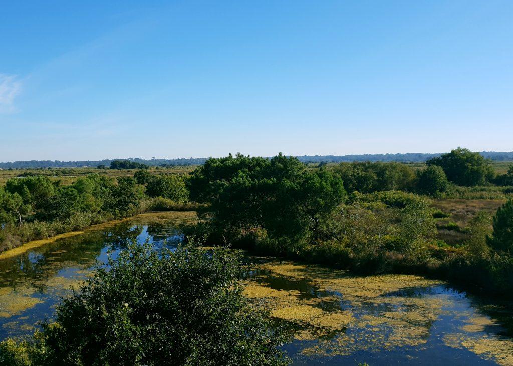 Bassin d'Arcachon - Le Teich - Nos aventures voyageuses