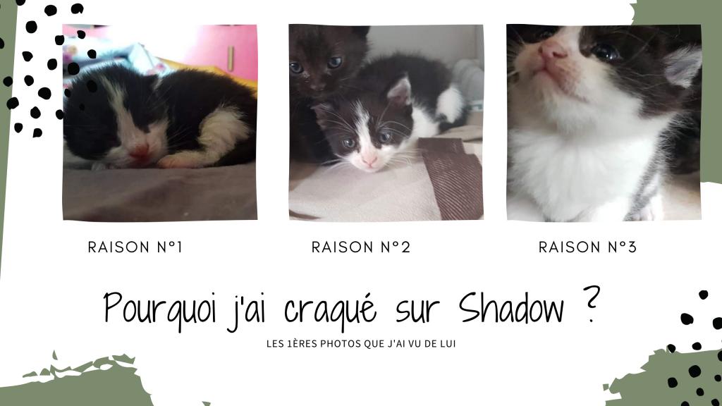 On adopte un chaton - Nos aventures voyageuses