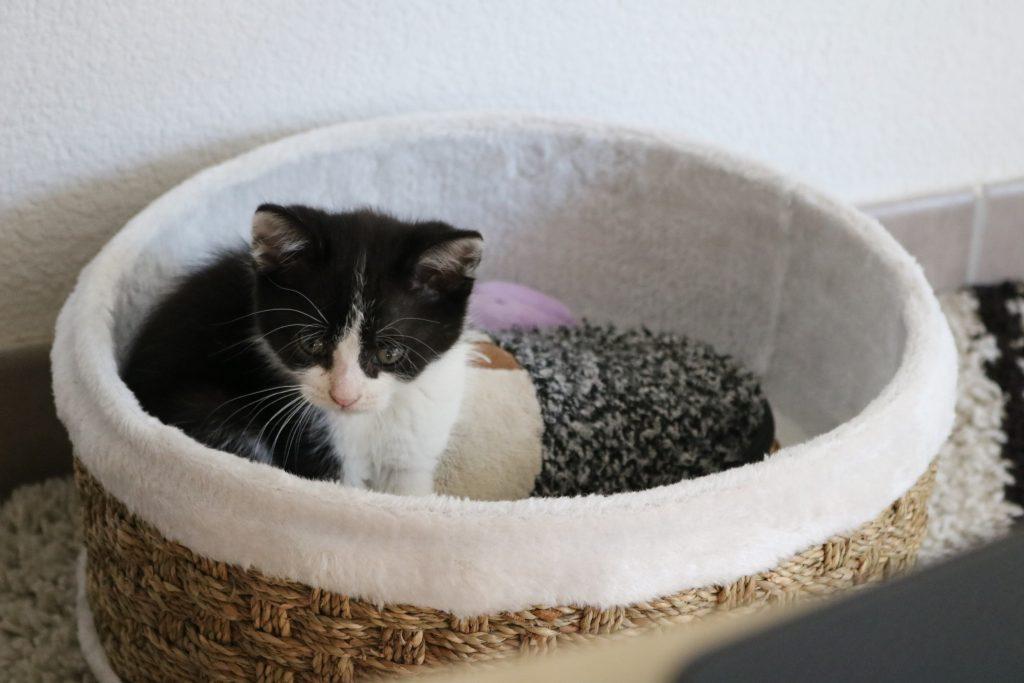 Adopter un chaton - Nos aventures voyageuses