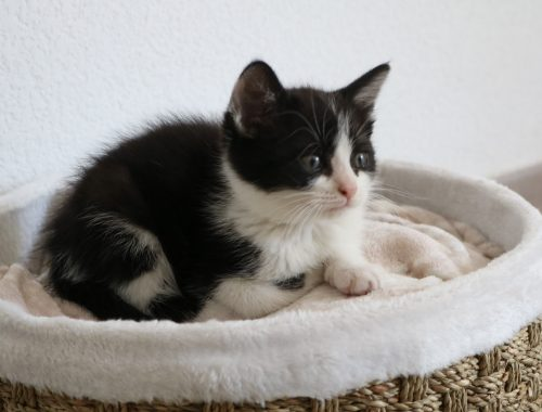 Adoption d'un chaton - Nos aventures voyageuses